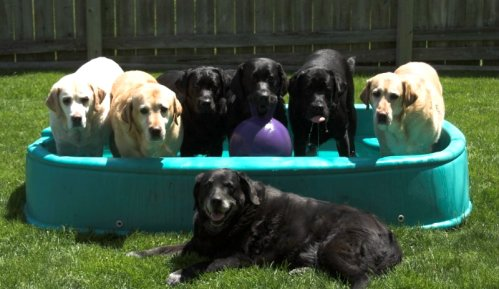 Type Of Wading Pool For Dogs Page 2